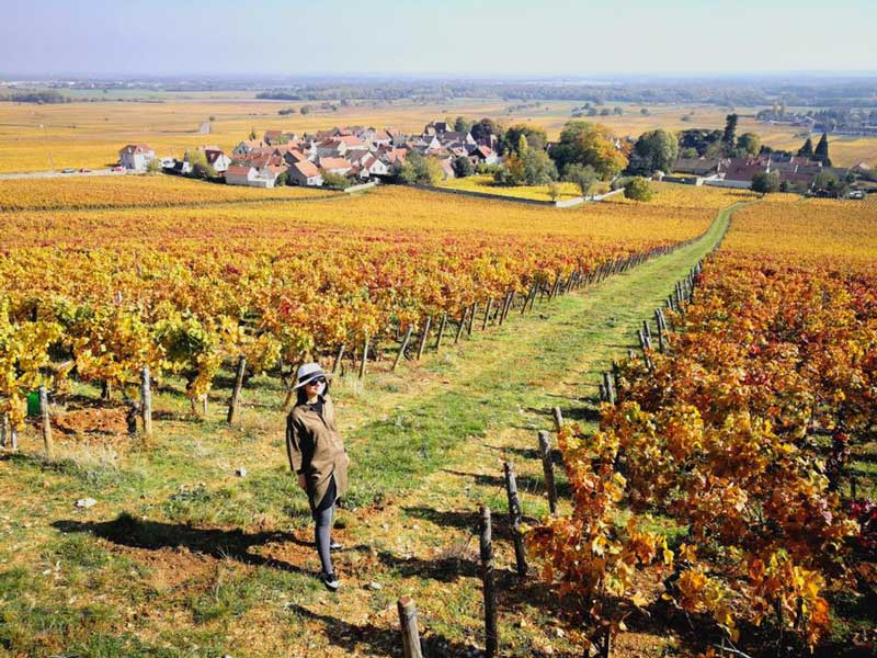 Wine culture and landscapes